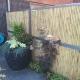 bamboo-garden-fence-screen-019