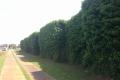 066-kokowall-noise-barrier-climbing-plants